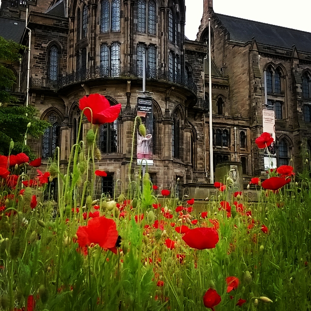 Poppies in the University of Glasgow memorial garden